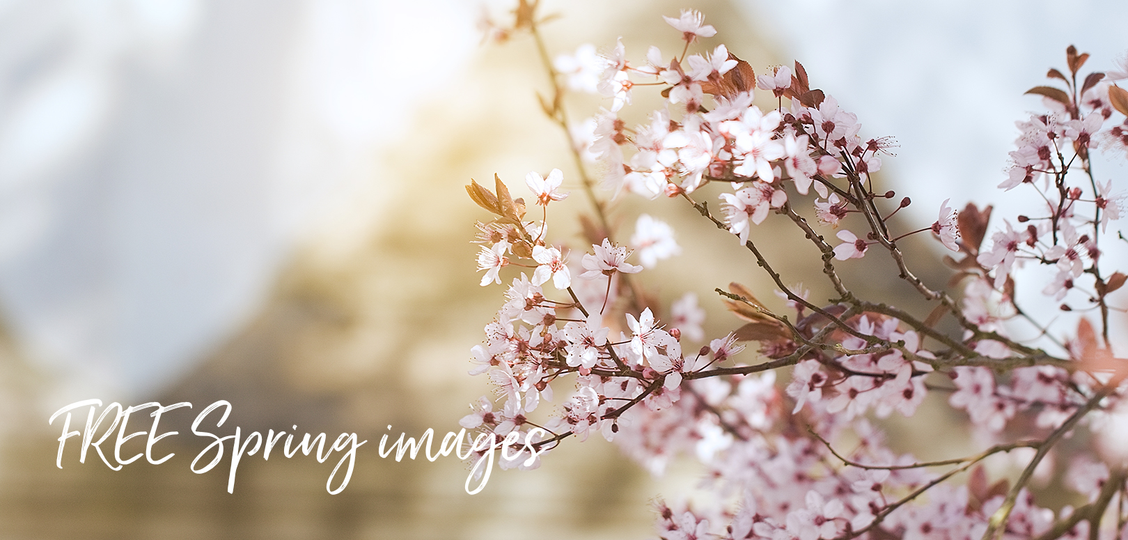 FREE Spring images