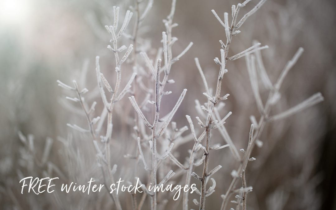 FREE Winter stock images